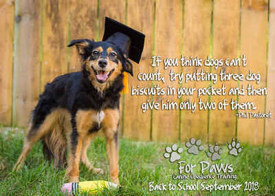 For Paws Daycare and Train Students