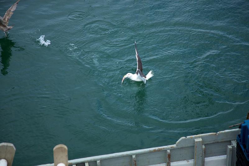 Cape Cod 2011 90.jpg