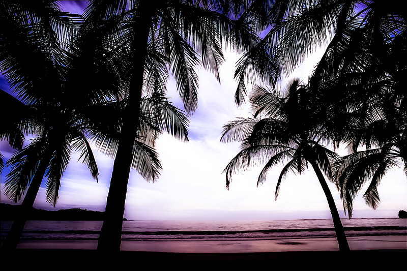 Carrillo Beach Palms at Sunset, Costa Rica