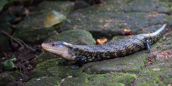Indonesia Reptiles