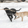Dogs - Saturday, Feb. 7, 2015 - Frame: 3712