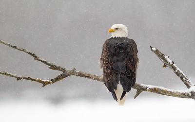 Hawks, Kites, and Eagles