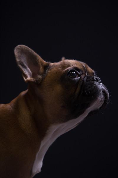 Edinburgh dog photography archie b