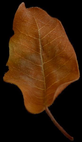 Leaf 43.png
