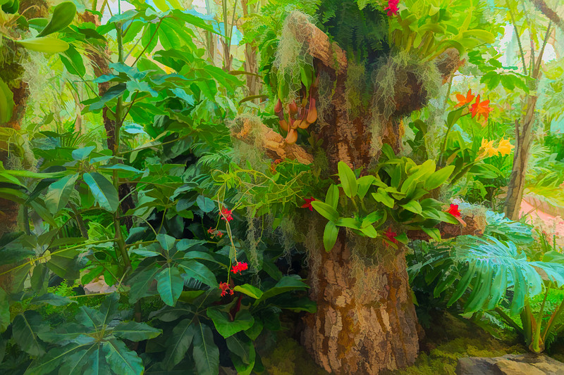 2008 Orchid Show