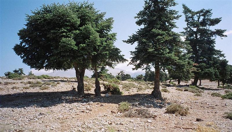 Typical terrain on Mt. Parnassos.
