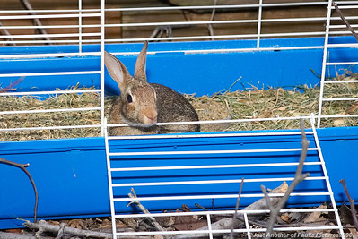 Settin' Thumper Free...