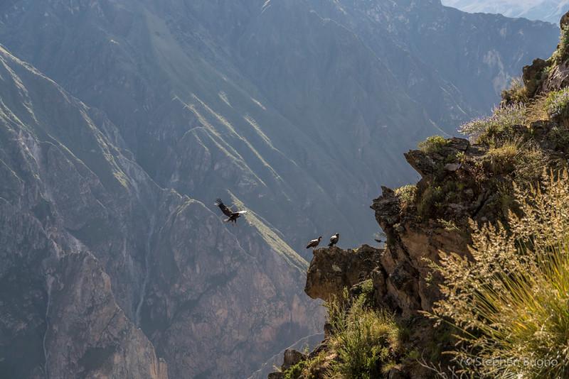 Colca Canyon-1249.jpg
