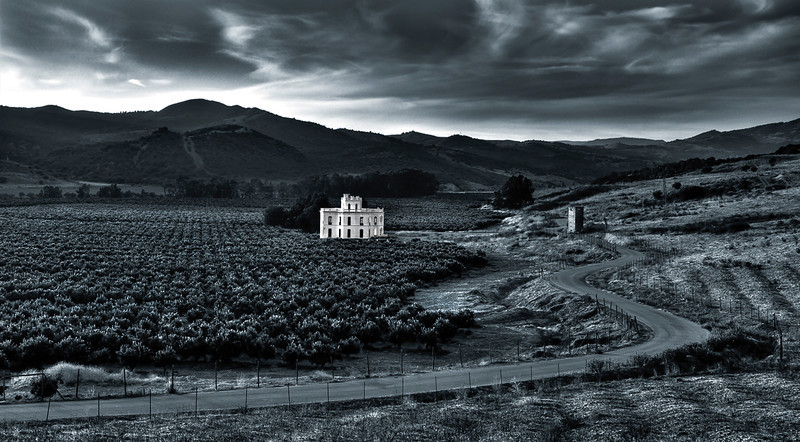 House surrounded by immense orange groves. 
