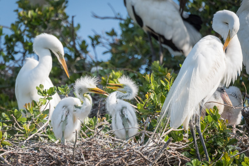 Birds of the Lowcountry