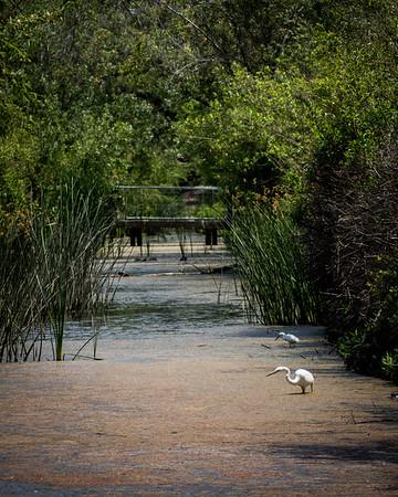 San Joaquin Marsh
