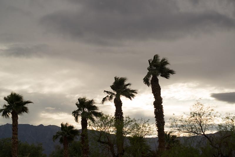 Five palms-126.jpg