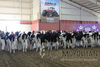 WI Jr SF 16 Holstein Yearlings