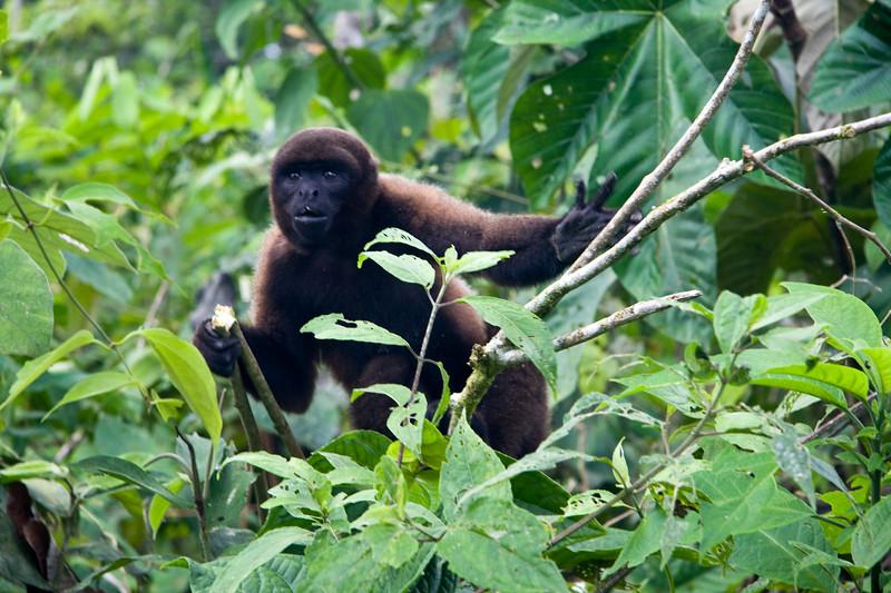 monkey-reserve_4890745978_o.jpg