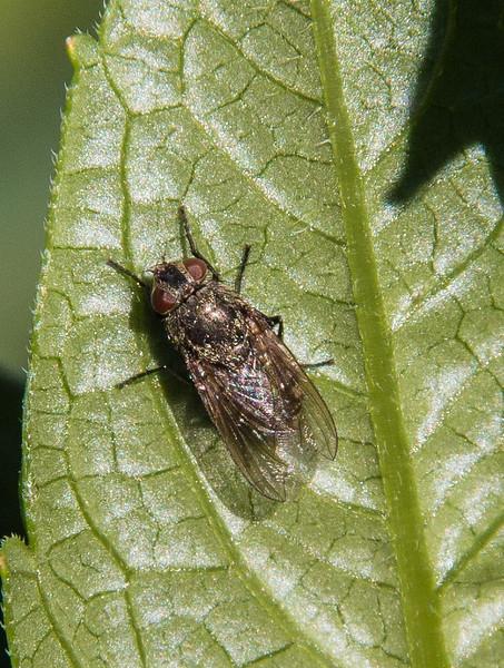 Jardin Botanique - Resting Fly