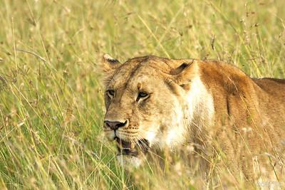 Kenya 2016: Predators