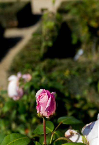 Day 19 Boboli Gardens (39 of 49).jpg