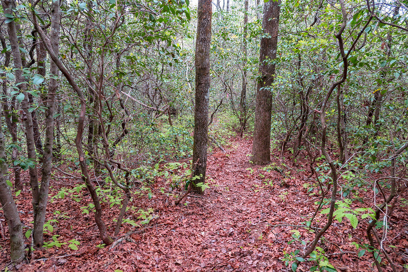 Interim Access Trail -- 2,680'