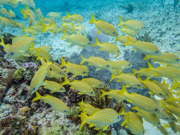 Yucatan Diving