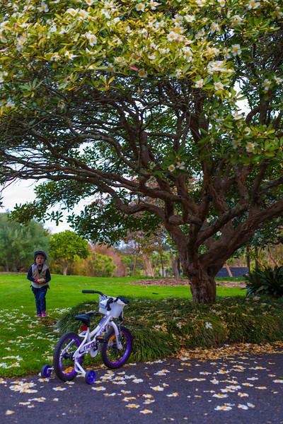 Biker, Auckland Botanical Gardens, Autumn 2014