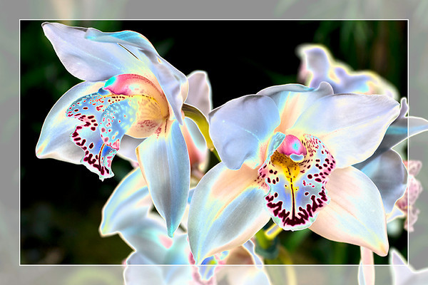 Filtered Orchids