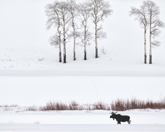 yellowstone landscapes and wildlife