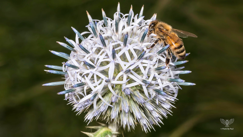 01 00010 Bee on Ball 16x9.jpg