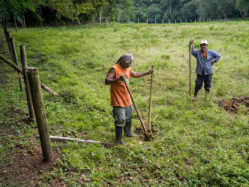 Men working in field, Chaa Creek Road, Chaa Creek Nature Reserve, San Ignacio, Belize