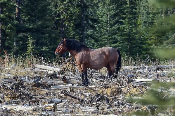 10-18-15 Ab. Wildies - 4 Stallions