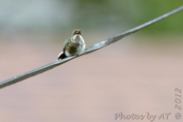"""2012 """"September"""" Yardbirds"""