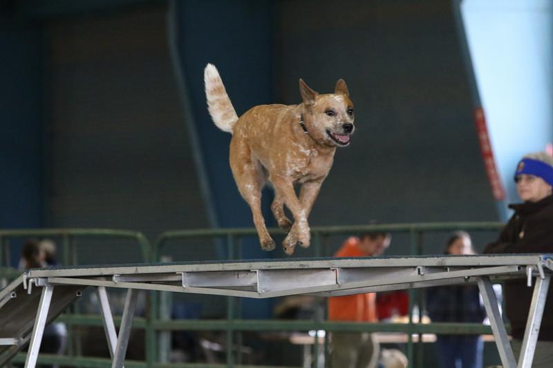3-10-2019 Bloodhound-9698.jpg