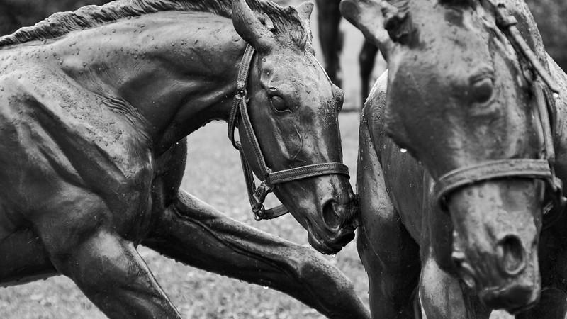Young Horses At Play