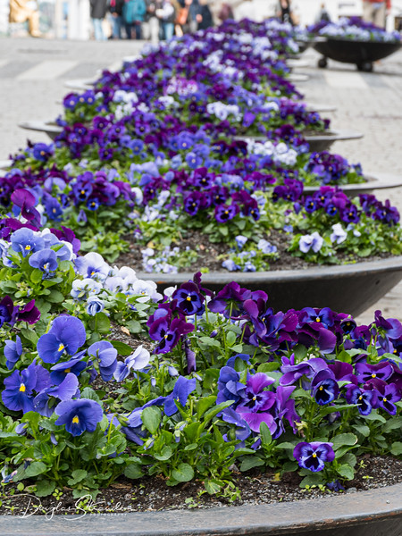 Karl Johans flower planters