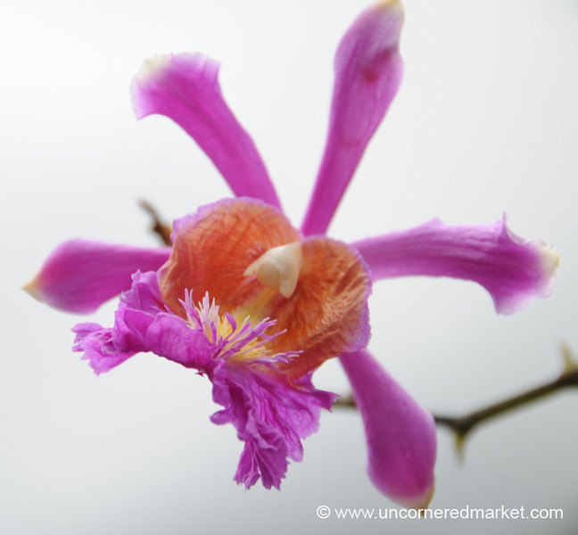 Wild Orchid - Day 3 of Salkantay Trek, Peru