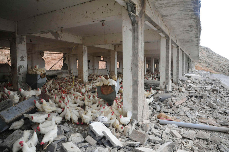 . Damage is seen in what appears to be a chicken farm following an air strike near Damascus May 5, 2013, in this handout photograph distributed by Syria\'s national news agency SANA. Israel carried out its second air strike in days on Syria early on Sunday, a Western intelligence source said, in an attack that shook Damascus with a series of powerful blasts and drove columns of fire into the night sky. Israel declined comment but Syria accused the Jewish state of striking a military facility just north of the capital - one which its jets had first targeted three months ago. SANA said Israeli aircraft struck in three places: northeast of Jamraya; the town of Maysaloun on the Lebanese border; and the nearby Dimas air base. REUTERS/SANA/Handout via Reuters