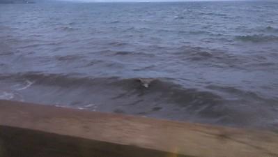 Sea Side Liner