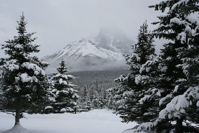 Canadian Rockies Winter