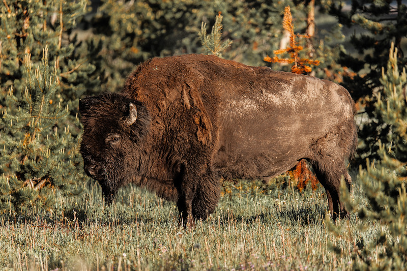 Yellowstone Misc-49.jpg
