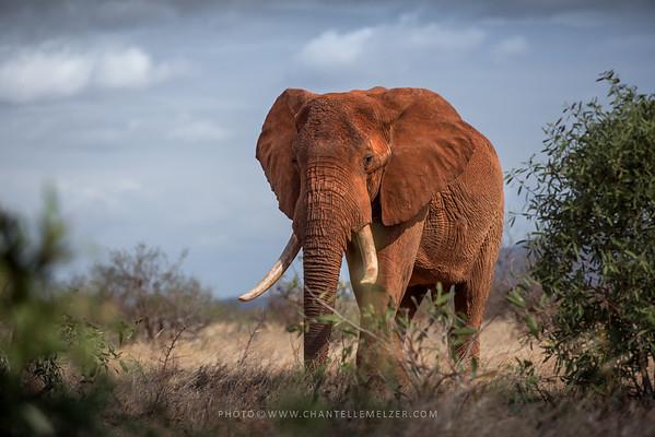 WILDLIFE | Tsavo