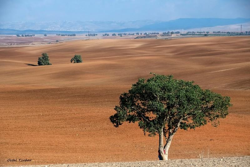 העץ 7.jpg