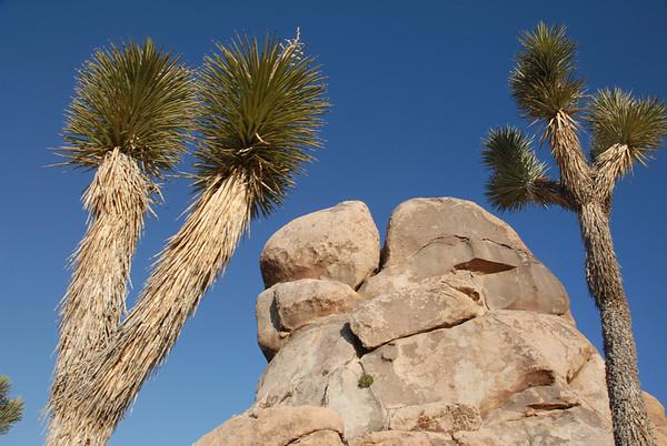 California/Nevada 2010