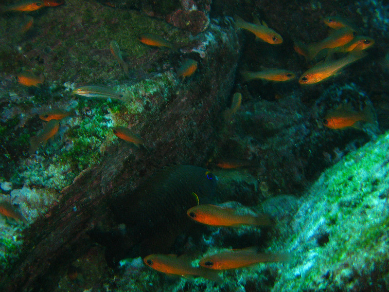 Diving in the Galapagos (305 of 392)