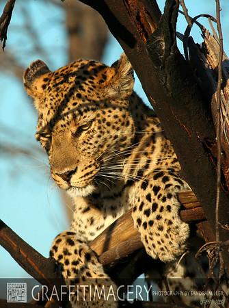 Lebala Camp, Botswana Africa