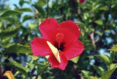 9-1-1998 Deck Flowers