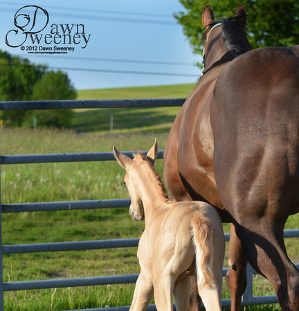 pockets and her filly born May 14th 2012