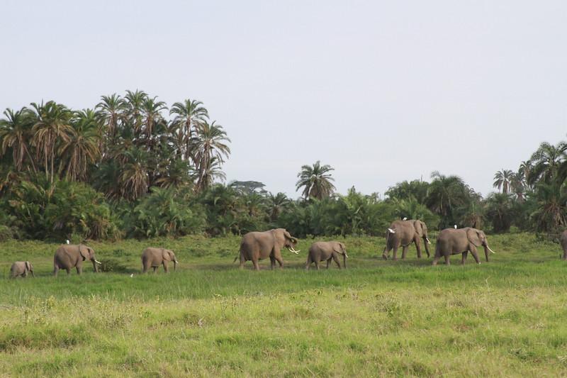 Kenya 2019 #2 562.JPG