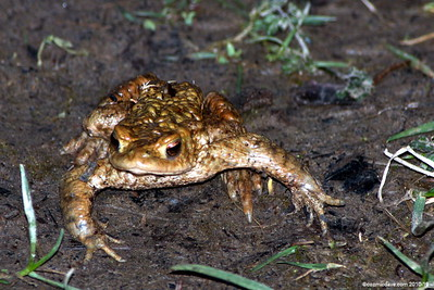 Frogs and Toads Set 1