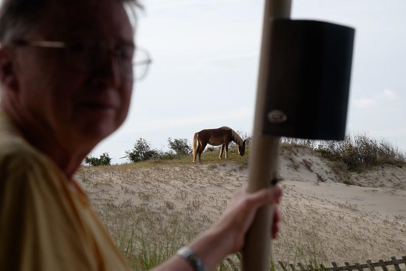 20161003 630 Corolla Wild Horse Tour.jpg