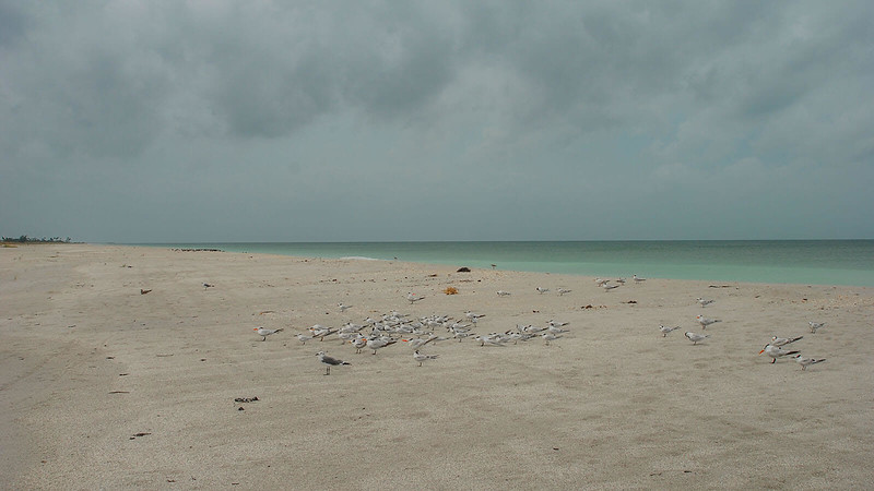 Gulf of Mexico Gasparilla Island