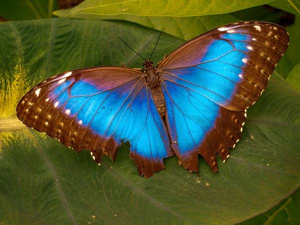 Brookside Gardens:  Butterflies 2017